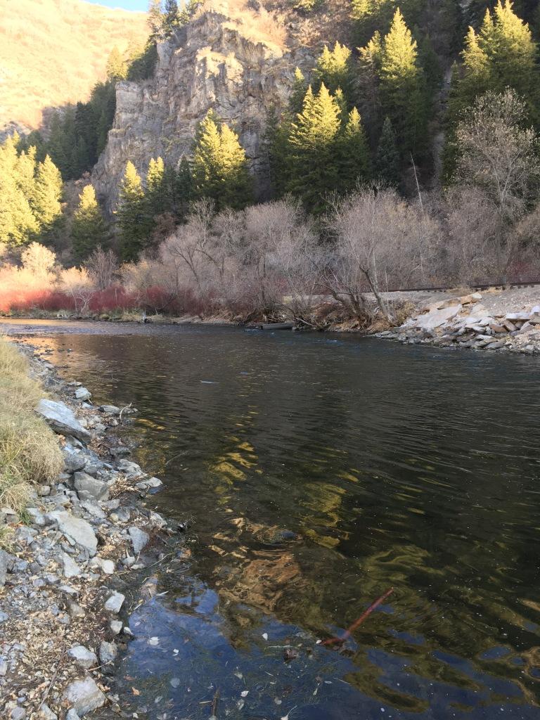 Lower Provo River